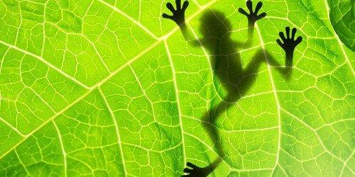 A Teoria da Evolução precisa ser expandida?